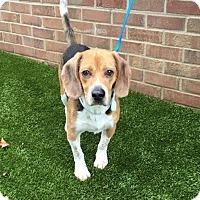 Adopt A Pet :: Pepper - Freeport, ME