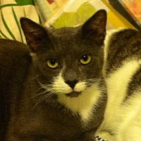 Adopt A Pet :: GOOFY COOKIEDOO & BOOBOO - New York, NY