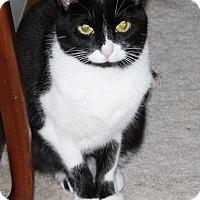Adopt A Pet :: Luna-$25.00 - Naperville, IL