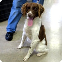 Adopt A Pet :: Chance - Indiana, PA