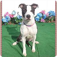 Adopt A Pet :: STAR - Marietta, GA