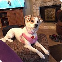 Adopt A Pet :: Hannah - Austin, TX