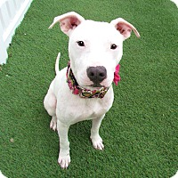 Adopt A Pet :: Kenzie - House Springs, MO