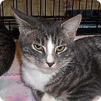 Adopt A Pet :: Patty - Richmond, VA