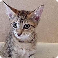 Adopt A Pet :: TigerMax - Vero Beach, FL