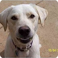 Adopt A Pet :: Laddy Boy - York, SC