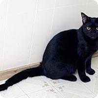 Adopt A Pet :: Mortimer - Shelton, WA
