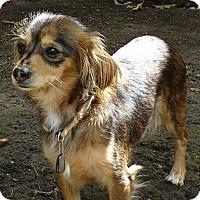 Adopt A Pet :: Princess - San Jose, CA