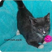 Adopt A Pet :: Captain Jack - Catasauqua, PA