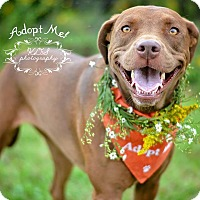 Adopt A Pet :: Luna - Fort Valley, GA