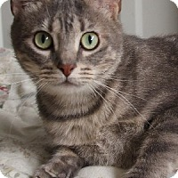 Adopt A Pet :: Tiffany - Savannah, MO