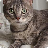 Adopt A Pet :: Tiffany - Savannah, MO