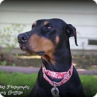 Adopt A Pet :: Ethel - Tracy, CA