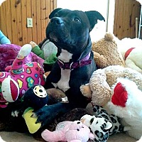 Adopt A Pet :: Princess - Hornell, NY