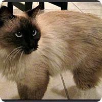 Adopt A Pet :: Alaina - Gilbert, AZ