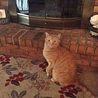 Adopt A Pet :: zz 'Lucky Joe'  courtesy listing needs LOVE! - Cincinnati, OH