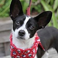 Adopt A Pet :: Tamale - Pacific Grove, CA