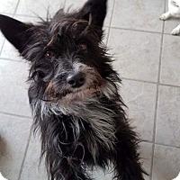 Adopt A Pet :: Toto - Ogden, UT