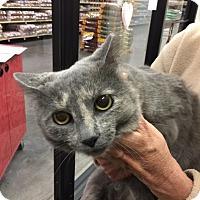 Adopt A Pet :: Silver - Cincinnati, OH