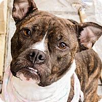 Adopt A Pet :: Fiona - Nashville, TN