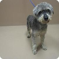 Adopt A Pet :: MOZART - Reno, NV