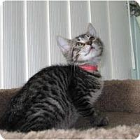 Adopt A Pet :: Michele - Catasauqua, PA