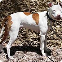 Adopt A Pet :: Sherman - Gilbert, AZ