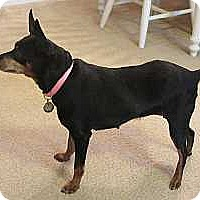 Adopt A Pet :: Gianna - McDonough, GA