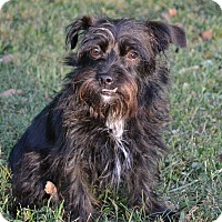 Adopt A Pet :: Josie~ADOPTED!! - Troy, OH