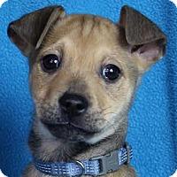 Adopt A Pet :: Jayden - Minneapolis, MN