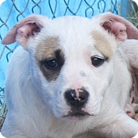 Adopt A Pet :: Maddie - in Maine - kennebunkport, ME