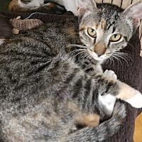 Adopt A Pet :: Olivette - Dallas, TX
