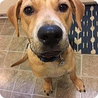 Adopt A Pet :: Skipper - PORTLAND, ME