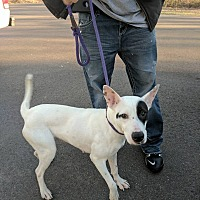 Adopt A Pet :: Zuri - Covington, TN