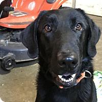 Adopt A Pet :: Patrick O Henry~watch my video - Glastonbury, CT