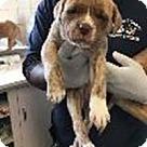 Adopt A Pet :: Willow's Sage