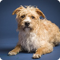 Adopt A Pet :: Harris - MEET ME!! - Norwalk, CT