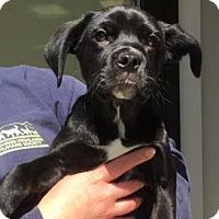 Adopt A Pet :: Kameron - Cashiers, NC