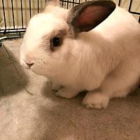 Adopt A Pet :: Rumplestiltskin - Williston, FL