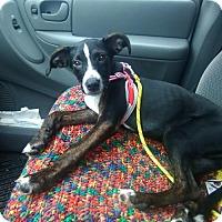 Adopt A Pet :: Alma - Tonawanda, NY