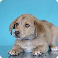 Adopt A Pet :: Norbit - Waldorf, MD