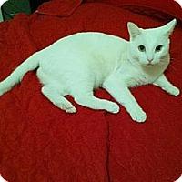 Adopt A Pet :: Queen - Los Angeles, CA