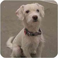 Adopt A Pet :: Frasier - Phoenix, AZ