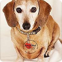 Adopt A Pet :: Bo - Denver, CO
