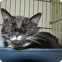 Adopt A Pet :: Lulu - Chesapeake, VA
