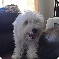 Adopt A Pet :: Katie - St. Petersburg, FL