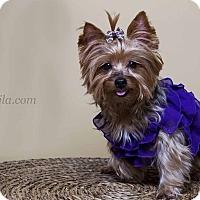 Adopt A Pet :: Lexie - Baton Rouge, LA