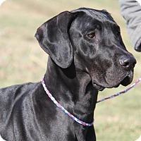 Adopt A Pet :: Yager - Baden, PA