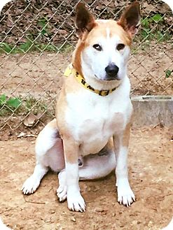 Husky Mix Dog for adoption in Arlington, Tennessee - Logan