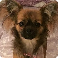 Adopt A Pet :: Grace - Chesterfield, VA